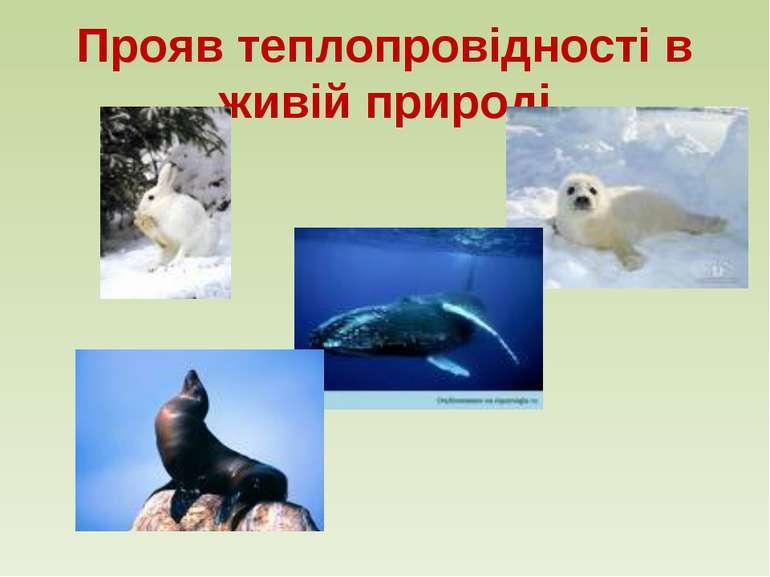 Прояв теплопровідності в живій природі