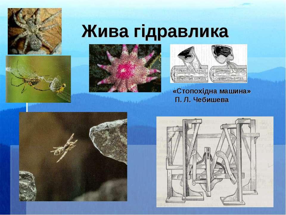 Жива гідравлика «Стопохідна машина» П. Л. Чебишева