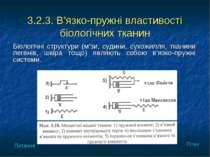 3.2.3. В'язко-пружні властивості біологічних тканин Біологічні структури (м'з...
