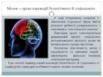 Мозок – орган взаємодії біологічного й соціального У ході історичного розвитк...