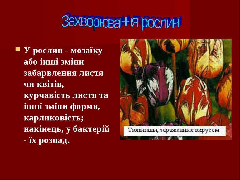У рослин - мозаїку або інші зміни забарвлення листя чи квітів, курчавість лис...