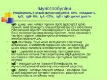 Імуноглобуліни Розрізняють 5 класів імуноглобулінів- 80% складають IgG, IgM- ...