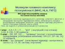 Молекули головного комплексу гістосумісності (МНС, HLA, ГКГС) МНС (major hist...