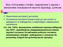 Вісь гіпоталамус-гіпофіз- наднирники є одним з механізмів гальмування імунної...