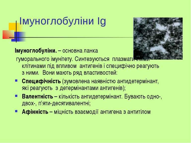 Iмуноглобуліни Ig Імуноглобуліни. – основна ланка гуморального імунітету. Син...