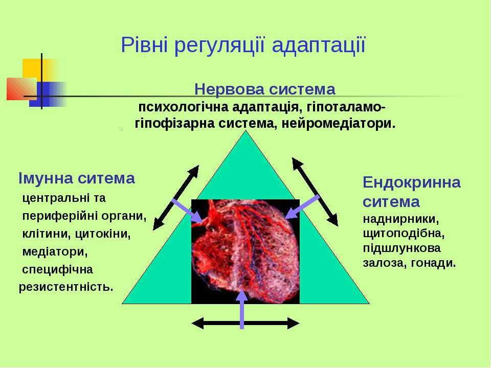 Рівні регуляції адаптації Нервова система психологічна адаптація, гіпоталамо-...
