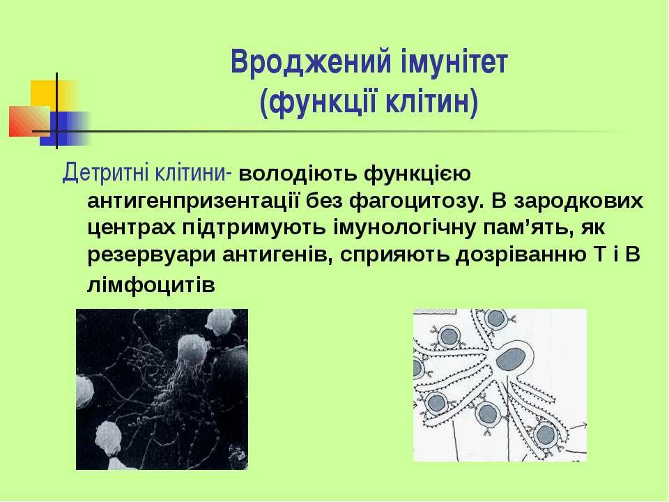 Вроджений імунітет (функції клітин) Детритні клітини- володіють функцією анти...