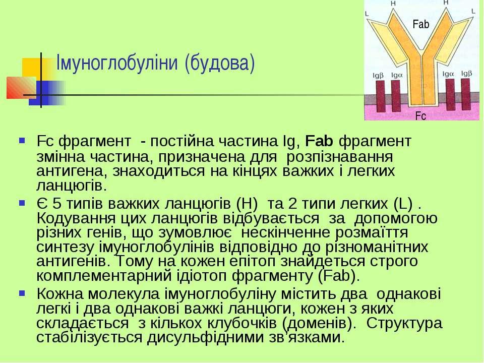 Імуноглобуліни (будова) Fс фрагмент - постійна частина Ig, Fab фрагмент змінн...