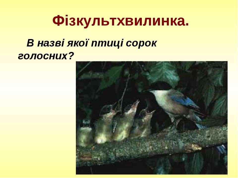 Фізкультхвилинка. В назві якої птиці сорок голосних?