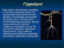 Гідроїдні Гідра живе в прісноводних водоймах із чистотою, прозорою водою. Це ...