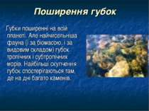 Поширення губок Губки поширенні на всій планеті. Але найчисельніша фауна (і з...