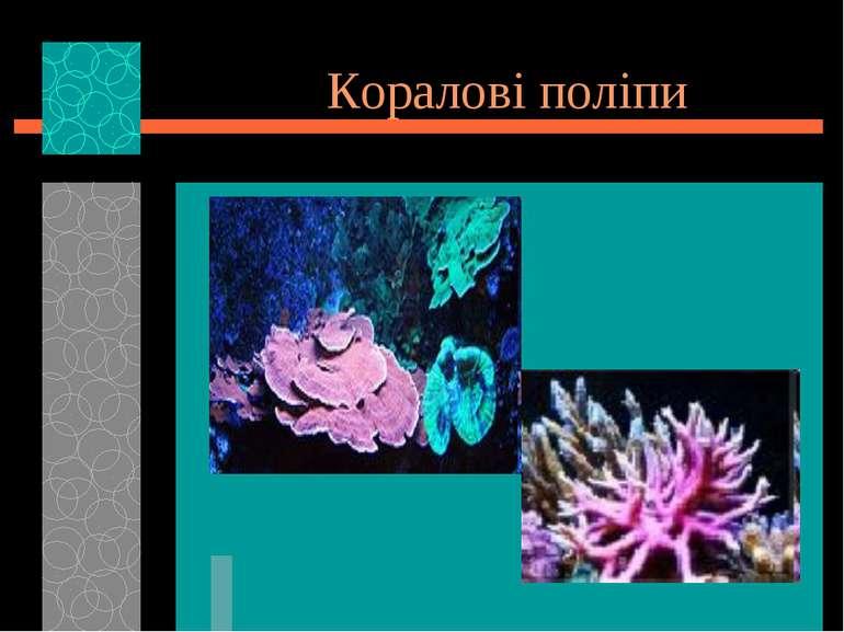 Коралові поліпи