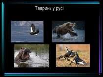 Тварини у русі