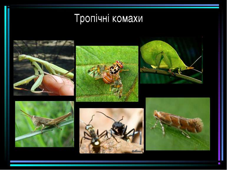 Тропічні комахи