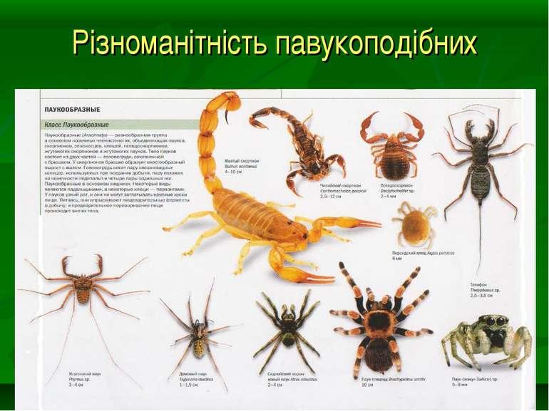Різноманітність павукоподібних
