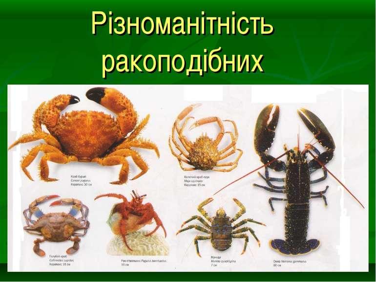 Різноманітність ракоподібних