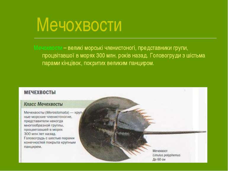 Мечохвости Мечохвости – великі морські членистоногі, представники групи, проц...