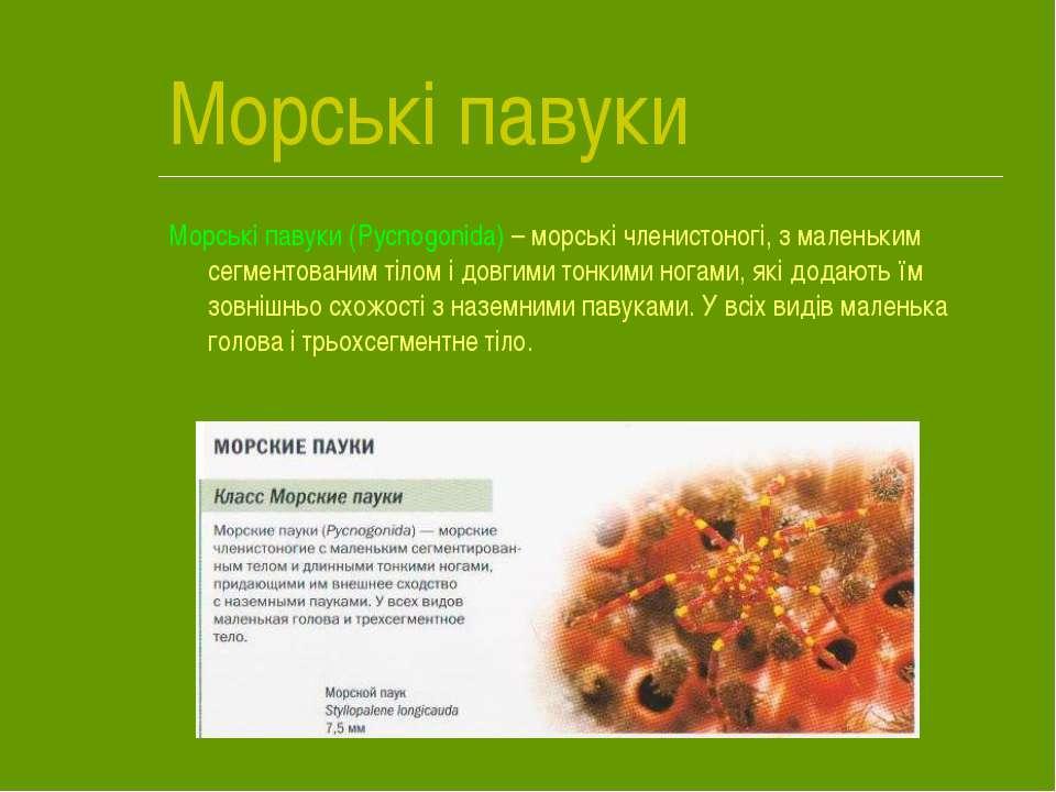 Морські павуки Морські павуки (Pycnogonida) – морські членистоногі, з маленьк...