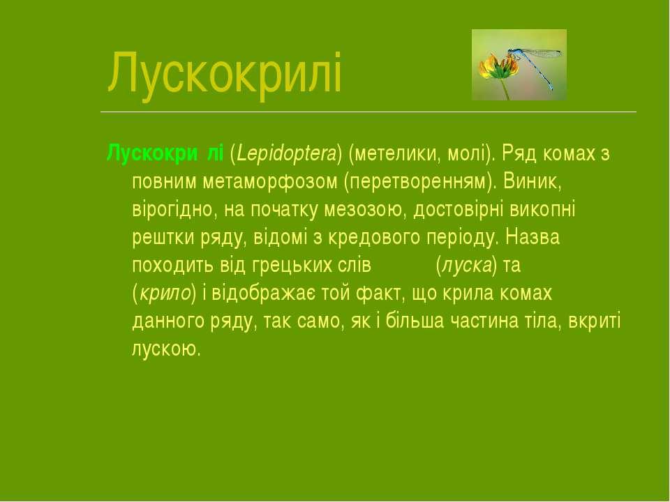 Лускокрилі Лускокри лі (Lepidoptera) (метелики, молі). Ряд комах з повним мет...
