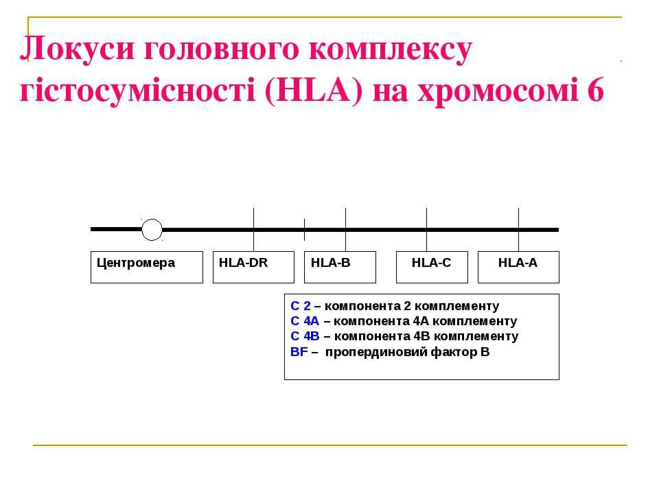 Локуси головного комплексу гістосумісності (HLA) на хромосомі 6