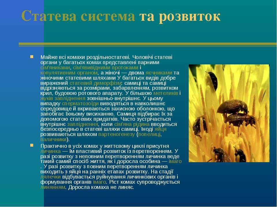 Статева система та розвиток Майже всі комахи роздільностатеві. Чоловічі стате...