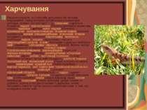 Харчування Раціони плазунів, як і способи добування їжі, вельми різноманітні;...