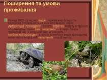 Поширення та умови проживання Понад 8000 сучасних видів, переважна більшість ...