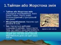 1.Тайпан або Жорстока змія Тайпан або Жорстока змія (Oxyuranus mіcrolepіdotus...