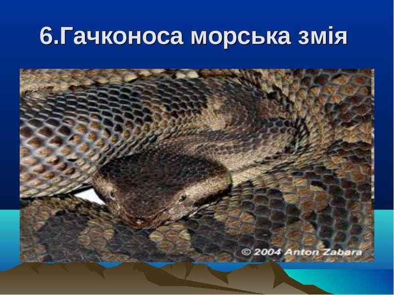 6.Гачконоса морська змія