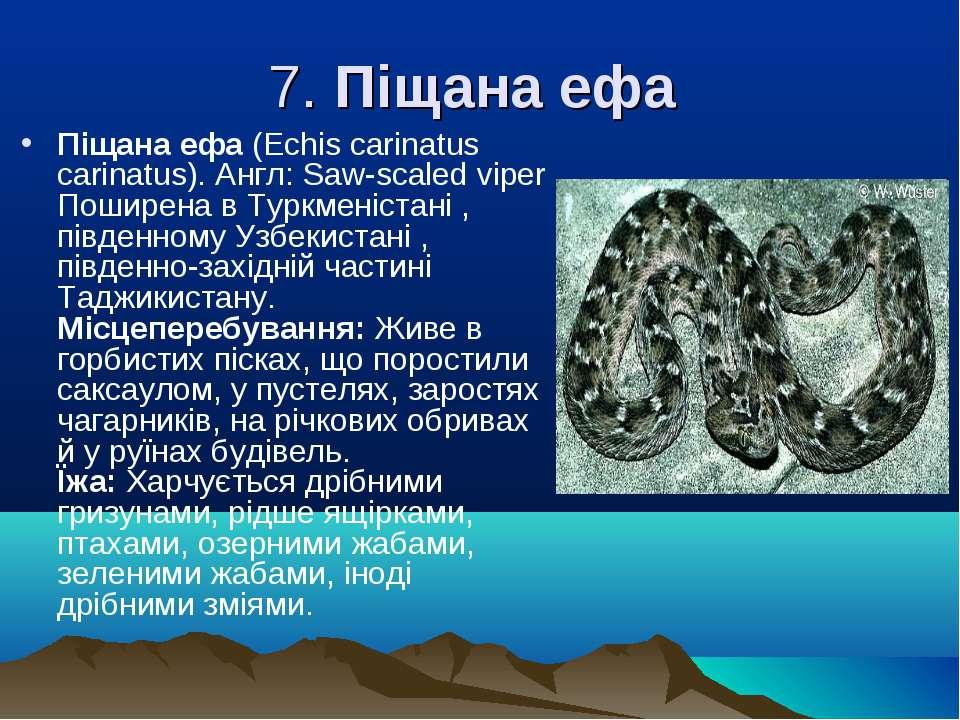 7. Піщана ефа Піщана ефа (Echіs carіnatus carіnatus). Англ: Saw-scaled vіper ...
