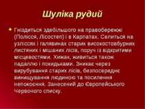 Шуліка рудий Гніздиться здебільшого на правобережжі (Полісся, Лісостеп) і в К...