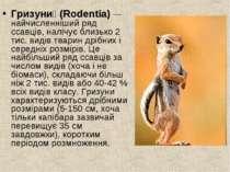 Гризуни (Rodentia)— найчисленніший ряд ссавців, налічує близько 2 тис. видів...