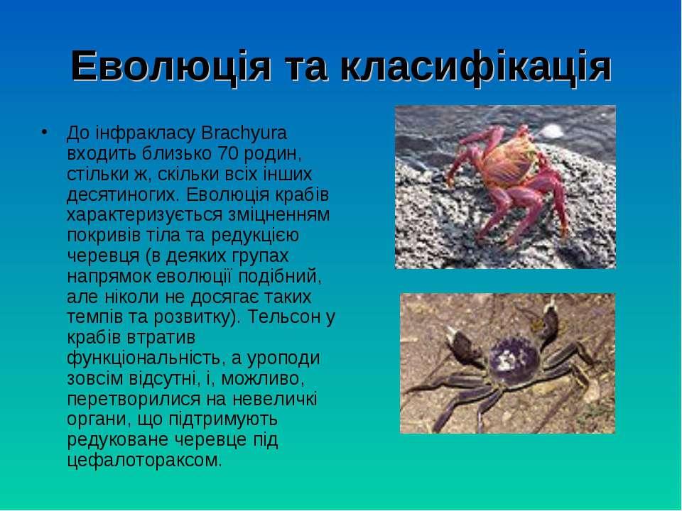 Еволюція та класифікація До інфракласу Brachyura входить близько 70 родин, ст...