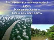 Тут розкинулись ліси незвичайної краси, Їх легенями зовуть – Кисень всім вони...