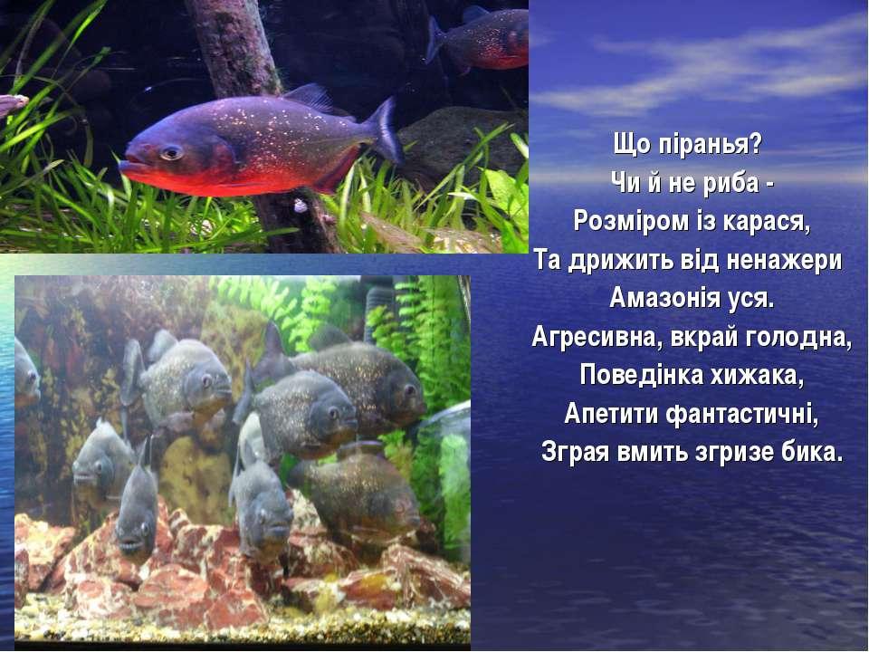Що піранья? Чи й не риба - Розміром із карася, Та дрижить від ненажери Амазон...