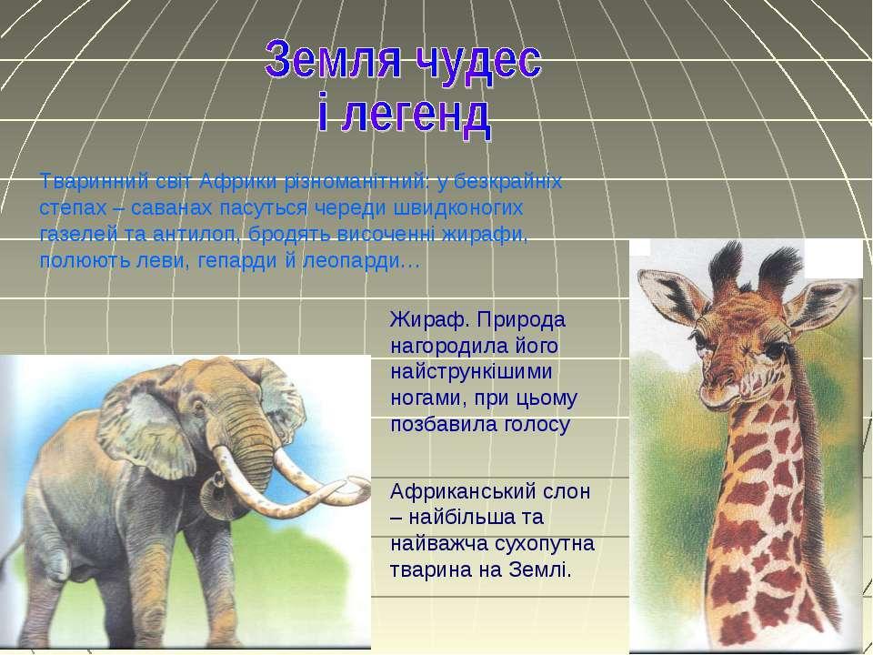 Тваринний світ Африки різноманітний: у безкрайніх степах – саванах пасуться ч...