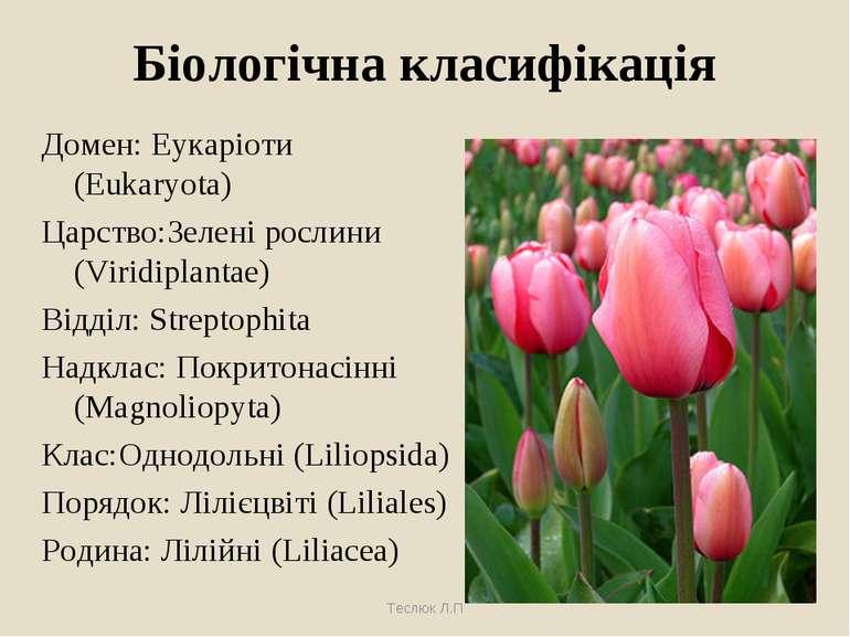 Біологічна класифікація Домен: Еукаріоти (Eukaryota) Царство:Зелені рослини (...