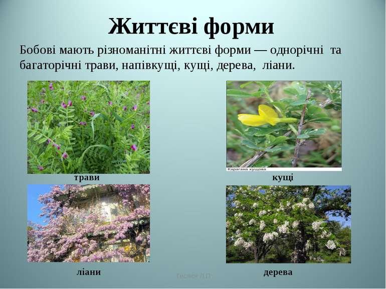 Життєві форми трави кущі ліани дерева Теслюк Л.П Бобові мають різноманітні жи...