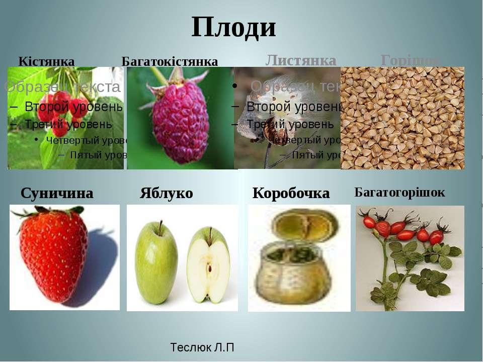 Плоди Кістянка Багатокістянка Листянка Горішок Суничина Яблуко Багатогорішок ...