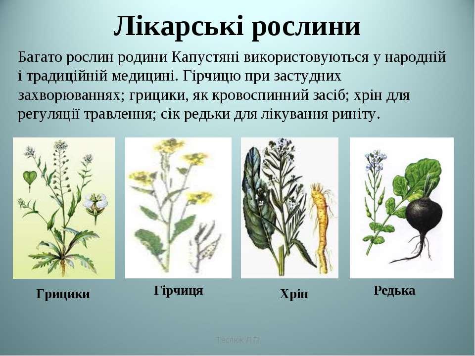 Лікарські рослини Багато рослин родини Капустяні використовуються у народній ...