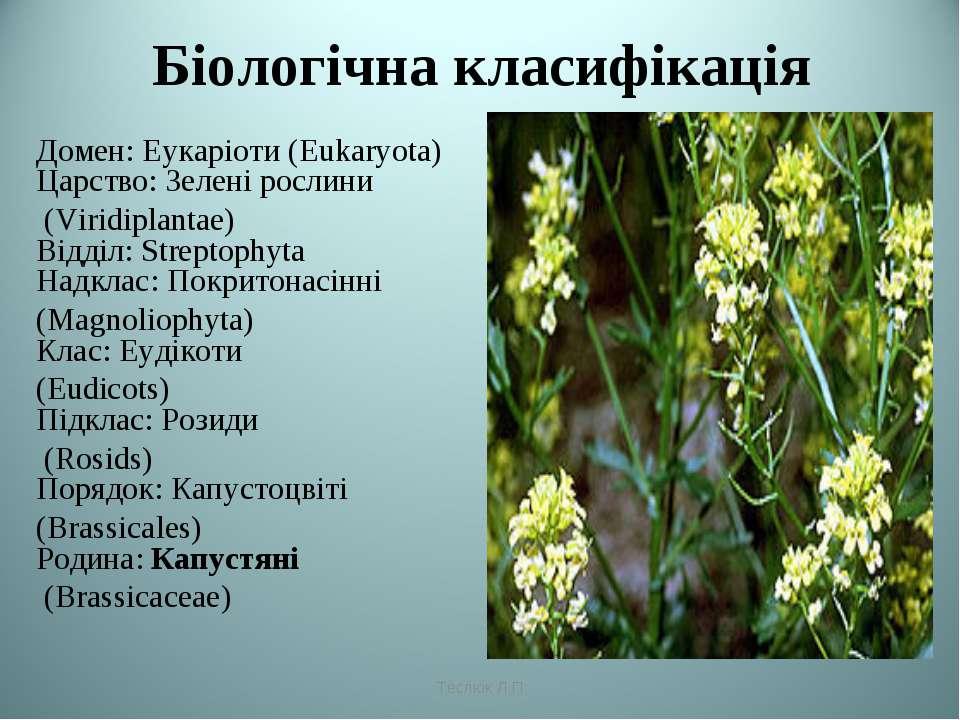 Біологічна класифікація Домен: Еукаріоти (Eukaryota) Царство: Зелені рослини ...