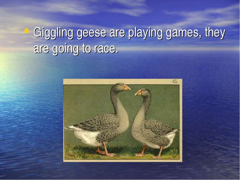 Giggling geese are playing games, they are going to race.