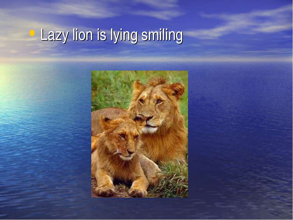 Lazy lion is lying smiling
