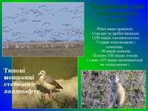 Різні види гризунів; Середні та дрібні хижаки; 1155 видів членистоногих; 7 ви...