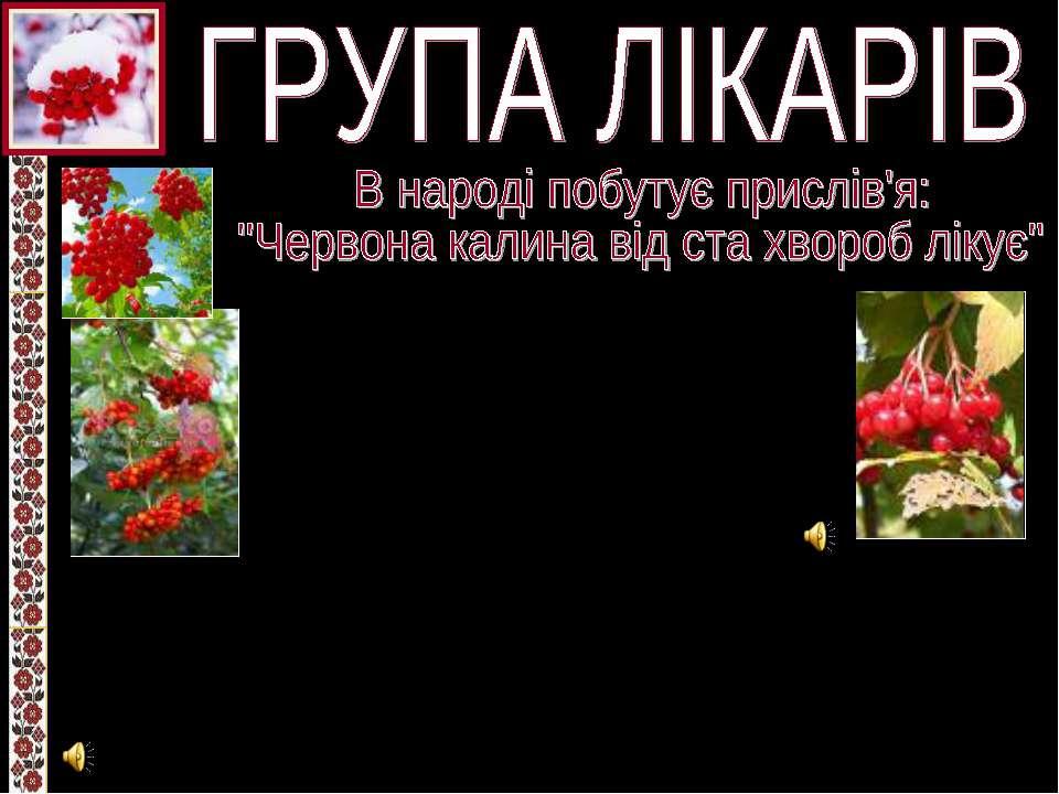 Кора і ягоди калини мають лікувальні властивості. Спиртовий екстракт калини т...