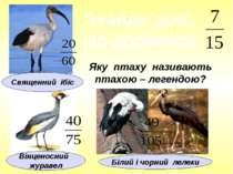 Яку птаху називають птахою – легендою? Знайди дріб, що дорівнює Білий і чорни...