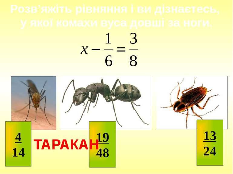 Розв'яжіть рівняння і ви дізнаєтесь, у якої комахи вуса довші за ноги. ТАРАКА...