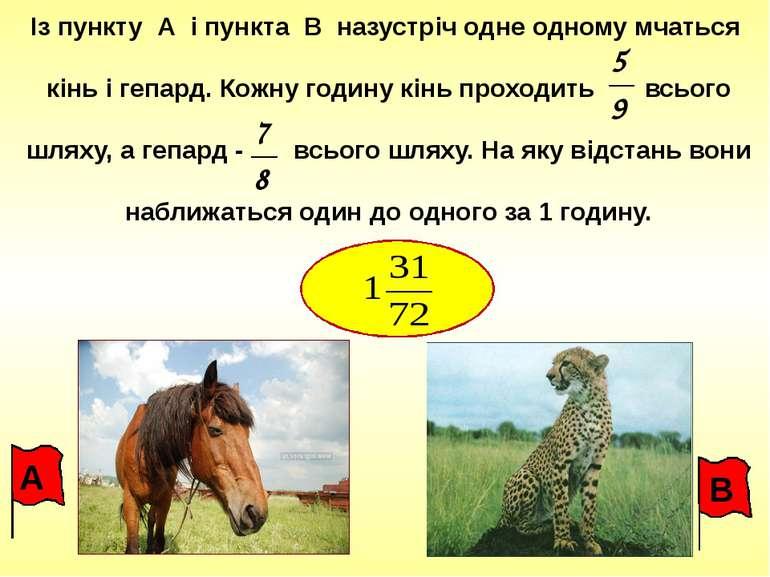 Із пункту А і пункта В назустріч одне одному мчаться кінь і гепард. Кожну год...
