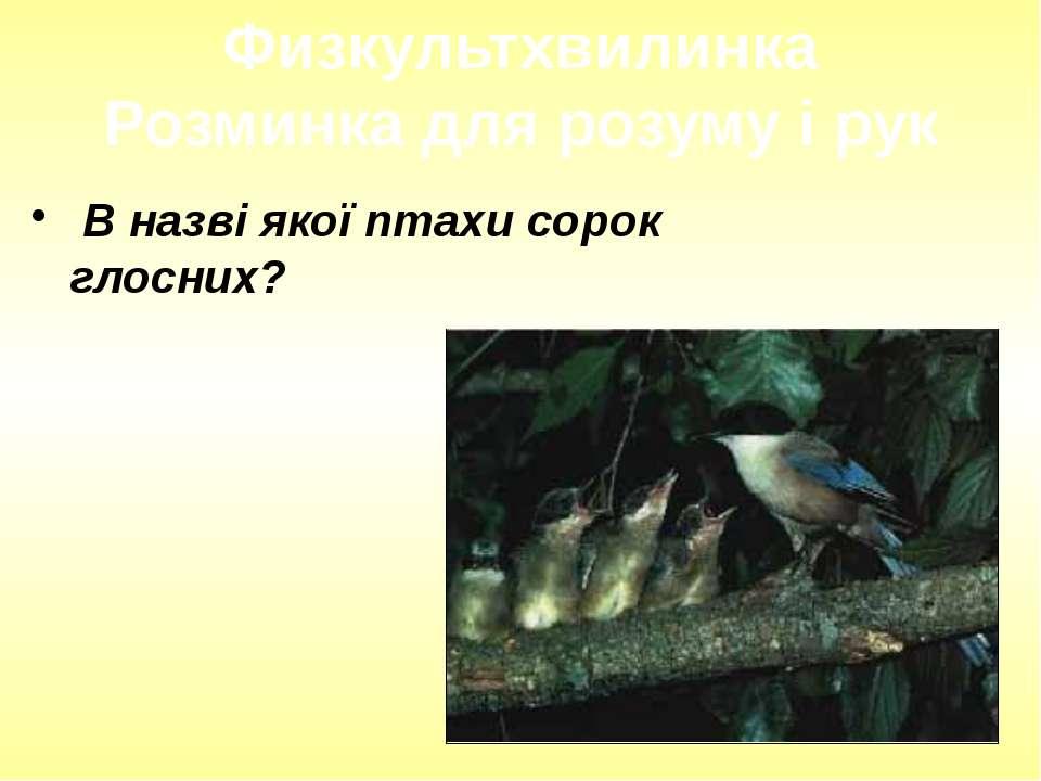В назві якої птахи сорок глосних? Физкультхвилинка Розминка для розуму і рук