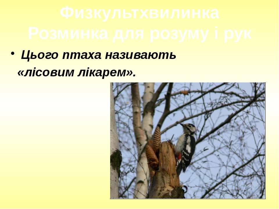 Цього птаха називають «лісовим лікарем». Физкультхвилинка Розминка для розуму...